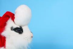 Conejo blanco y negro con el sombrero de Santa Imágenes de archivo libres de regalías