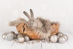 Conejo como tarjeta de Navidad Fotografía de archivo