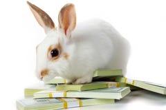 Conejo con el dinero Foto de archivo libre de regalías