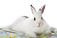 Conejo con el dinero Imagen de archivo