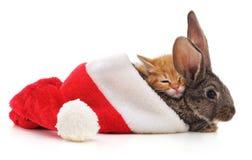 Conejo con el gatito en un sombrero de la Navidad Fotos de archivo