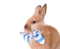 Conejo con la pajarita Imágenes de archivo libres de regalías