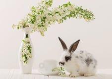 Conejo con las flores en el fondo blanco Imagen de archivo