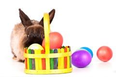 Conejo con los huevos de Pascua Fotografía de archivo