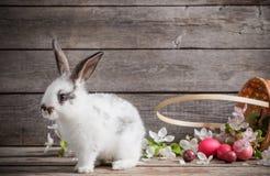 Conejo con los huevos de Pascua Imagen de archivo libre de regalías