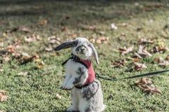 Conejo, conejito al aire libre Fotos de archivo