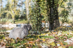 Conejo, conejito al aire libre Imágenes de archivo libres de regalías