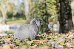 Conejo, conejito al aire libre Imagen de archivo libre de regalías