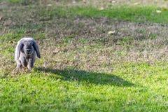 Conejo, conejito al aire libre Imagen de archivo