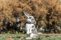 Conejo, conejito al aire libre Foto de archivo libre de regalías