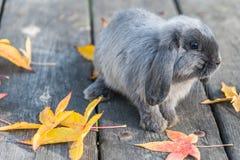 Conejo, conejito al aire libre Imagenes de archivo