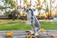 Conejo, conejito al aire libre Fotografía de archivo