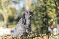 Conejo, conejito al aire libre Fotos de archivo libres de regalías