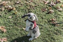Conejo, conejito al aire libre Fotografía de archivo libre de regalías