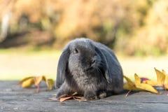 Conejo, conejito al aire libre Foto de archivo