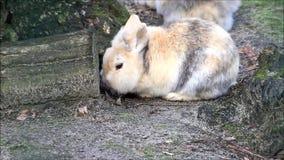 Conejo, conejito enano, exterior, pascua almacen de metraje de vídeo