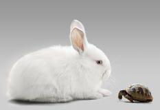 Conejo contra tortuga imagenes de archivo