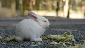Conejo de alimentación en el jardín