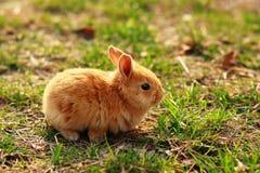 Conejo de conejito Foto de archivo libre de regalías