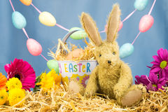 Conejo de conejito con el cubo de Pascua de la lata en escena colorida Imagenes de archivo
