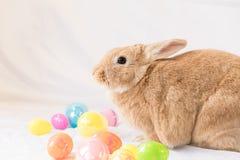 Conejo de conejito de pascua con la cesta de huevos coloridos, oídos abajo Imagenes de archivo