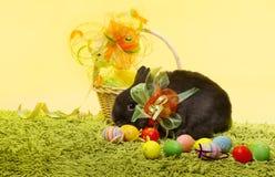 Conejo de conejito de pascua, huevos de la cesta de Pascua fotos de archivo