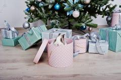 Conejo de conejito divertido en la caja de regalos debajo del árbol del Año Nuevo Winte feliz Imagen de archivo libre de regalías