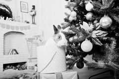 Conejo de conejito divertido en la caja de regalos debajo del árbol del Año Nuevo Winte feliz Foto de archivo