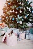 Conejo de conejito divertido en la caja de regalos debajo del árbol del Año Nuevo Winte feliz Foto de archivo libre de regalías