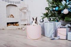 Conejo de conejito divertido en la caja de regalos debajo del árbol del Año Nuevo Winte feliz Fotografía de archivo