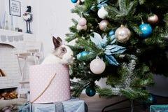 Conejo de conejito divertido en la caja de regalos debajo del árbol del Año Nuevo Winte feliz Fotografía de archivo libre de regalías