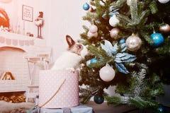 Conejo de conejito divertido en la caja de regalos debajo del árbol del Año Nuevo Winte feliz Imagenes de archivo