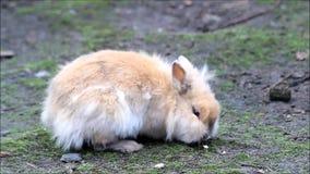 Conejo de conejito enano dulce afuera almacen de video