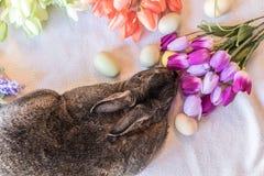 Conejo de conejito de Gray Easter al lado de tulipanes de la primavera en el ajuste del vintage, visión superior Fotografía de archivo