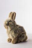 Conejo de conejito relleno Foto de archivo