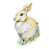 Conejo de la acuarela que se sienta en hierba Imagen de archivo libre de regalías