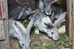 Conejo de la belleza de la naturaleza del diseño Foto de archivo libre de regalías
