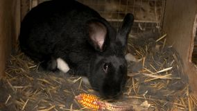 Conejo de la madre con los conejos del bebé en jaula almacen de metraje de vídeo