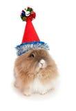 Conejo de Lionhead en el sombrero del Año Nuevo. Imagen de archivo
