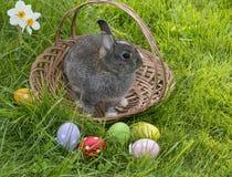 Conejo de Pascua en una cesta Fotografía de archivo libre de regalías