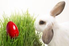 Conejo de Pascua, huevo de Pascua en hierba imágenes de archivo libres de regalías