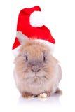 Conejo de Santa que mira la cámara Foto de archivo