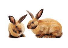 Conejo decorativo foto de archivo