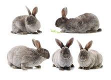 Conejo decorativo fotos de archivo