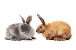 Conejo decorativo imagenes de archivo