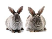 Conejo decorativo imagen de archivo libre de regalías