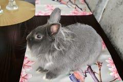 Conejo decorativo de Gray Easter Fotografía de archivo