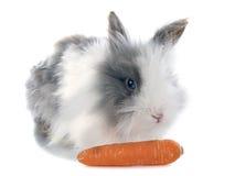 Conejo del angora Fotos de archivo