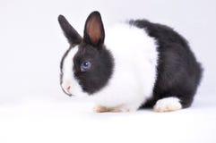 Conejo del animal doméstico imagen de archivo libre de regalías