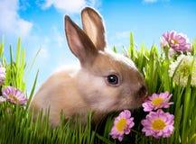 Conejo del bebé de Pascua en hierba verde